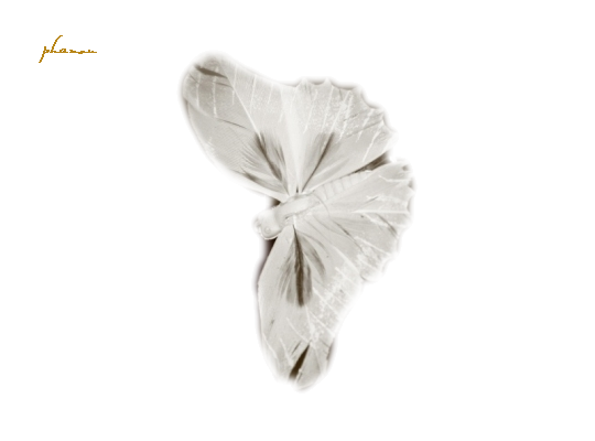 tube papillon