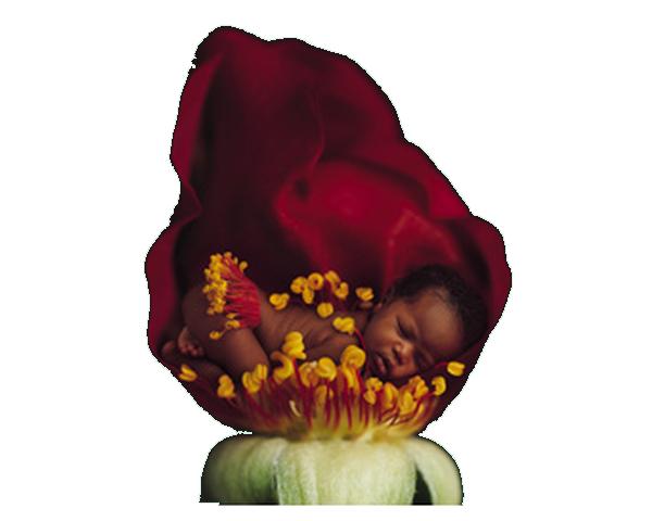 tube bebe fleur