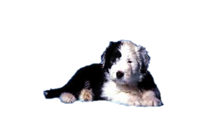 tube chien