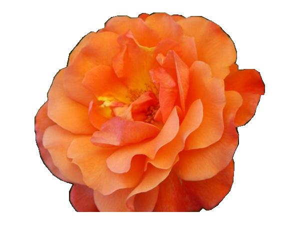 tube fleur