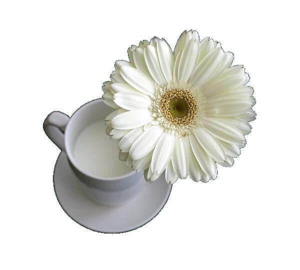 tube tase fleur